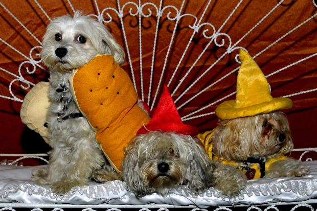 The third annual Pups on the Runway Halloween Costume Ball will feature dozens of dressed-up pooches.