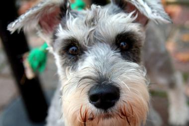 By Brooklyn is hosting an Oktoberbest party in celebration of  Schnauzers and Daschunds on Oct. 12.