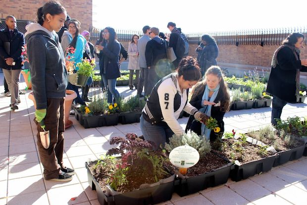 The new garden was designed by students through a partnership with the Horticultural Society of New York.