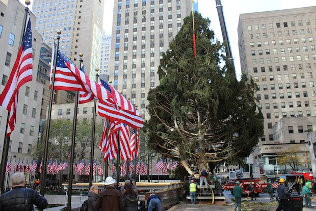 This year's tree is a 76-foot Norway spruce from Connecticut.