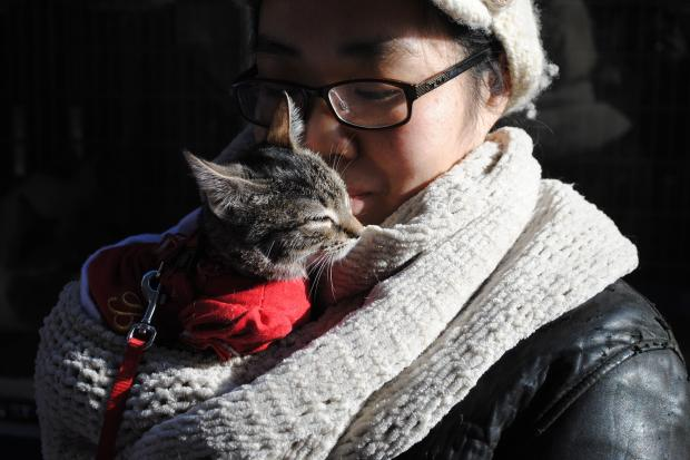 NYC Animal Alliance hosts the fourth annual Whiskers in Wonderland cat and rabbit event at Union Square and Columbus Square Petco on December 7th and 8th.