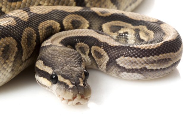 A mechanic found three snakes in a Gowanus garbage bin.