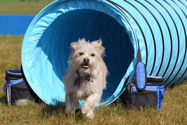 DNAinfo.com rounded up the best summer camps for man's best friend near New York City.