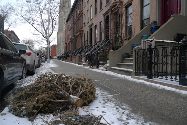 With spring arriving in a few weeks, Christmas trees still litter some Park Slope blocks.