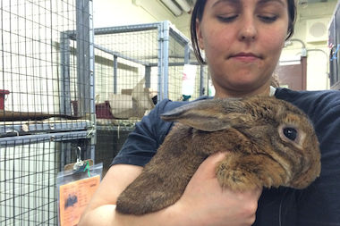 Erin Alanna, a member of the rescue group NYC Metro Rabbits, said she's seen a three-fold increase in abandoned bunnies during the seven years she's volunteered at the shelter.