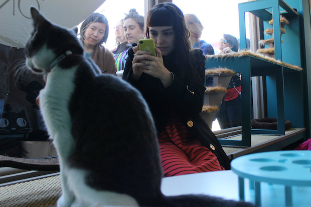 The city's first cat cafe will only be open from Thursday to Sunday at Bowery and Kenmare Street.