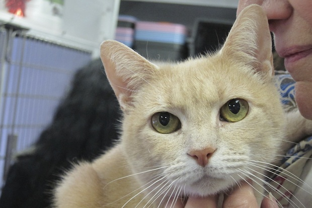 Lovable cats of just the right vintage were up for adoption Sunday in Gramercy.
