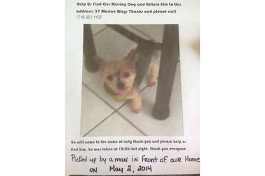 Angela Pennachio has put up fliers around Staten Island looking for her 11-year-old teacup Yorkie Rusty, who she said was taken from her front yard on Friday, May 2, 2014.