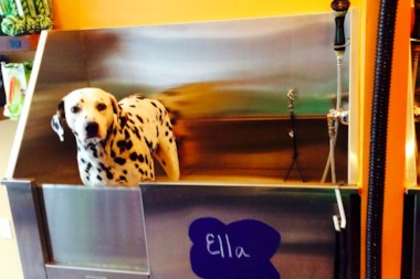 Ania Rogalska's pet Ella inspired her to open a self-service pet wash business.
