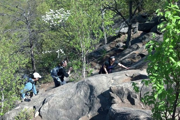 Hiking with a dog, for a workout, or to swim is easy for New Yorkers, even if you don't have a car.