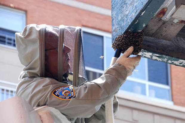 NYPD Detective Anthony Planakis, the department's bee expert, put in his paperwork to retire Tuesday, August 5, 2014.
