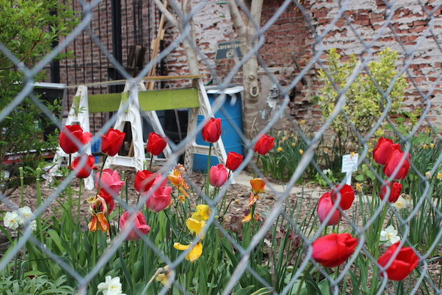 A real estate developer boarded up a community garden in Crown Heights on Thursday.
