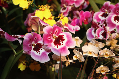 A crafts fair and orchid sale will happen on Sunday along Broadway.