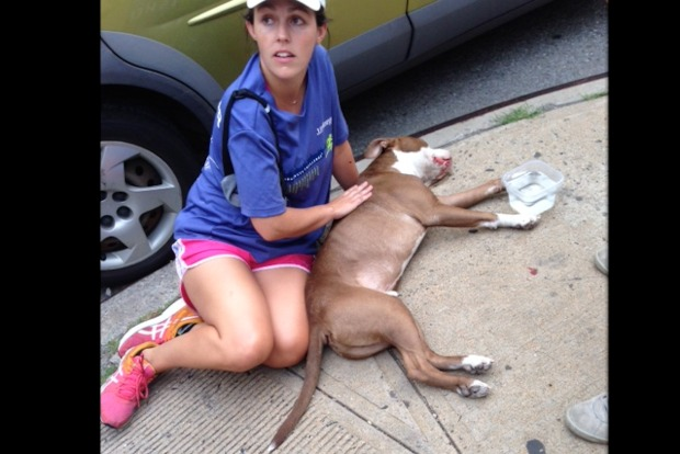 "A 50-pound pit bull fell from the Brooklyn Queens Expressway at Manhattan Avenue Tuesday, witnesses said. It fell ""belly up,"" they said, as if it had been thrown."