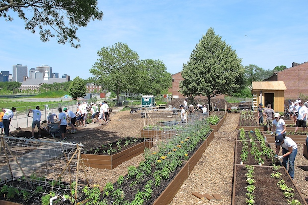A new 8,000-square-foot educational farm has cropped up on Governors Island.