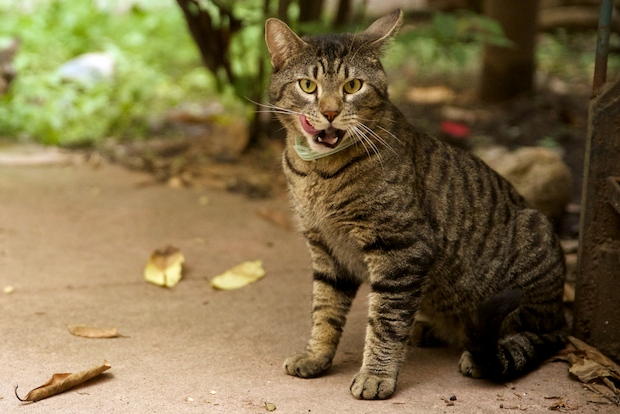 Cats Enlisted To Battle Doorman Buildings Rat Problem Clinton