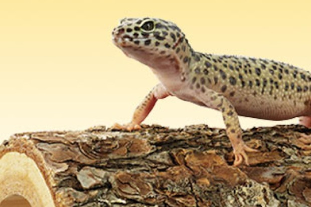 petco opening forest hills location with reptile rally forest