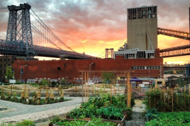 North Brooklyn Farms set up in South Williamsburg a year ago and recently raised more than $20,000 to find a new space.
