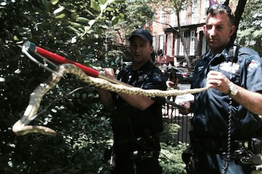 Police officers took the snake to a local animal shelter, where it found new owners in less than a day.