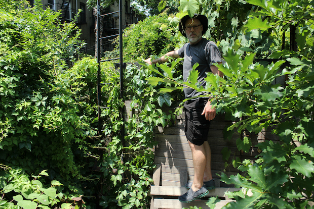 The owner of a Carroll Gardens brownstone plans on putting up an eco-friendly tree house this summer in his backyard.