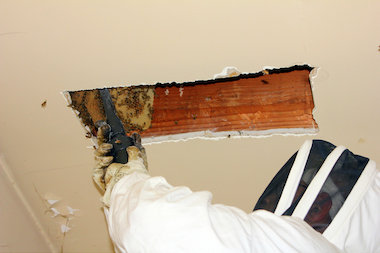 Tony Bees and another apiarist teamed up to remove 50,000 bees from an Elmhurst apartment.