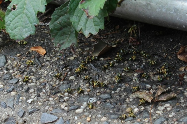 Dozens of wasps were found dead in Sol Bloom Playground Friday after police were spotted spraying an unknown substance on bushes bordering the park, police and experts.