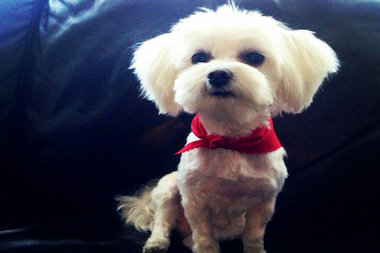 The 3-year-old Maltese was killed at Marcus Gravey Park over the weekend.