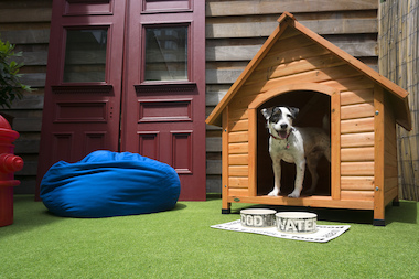 The OUT Hotel's Dog House Suite has treats, a fire hydrant, and a dog bed for Fido.