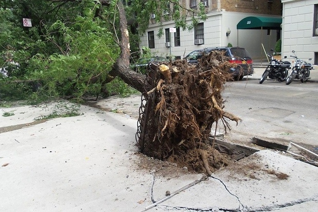 A 40-foot tree fell outside of a Greenwich Village apartment building Tuesday.