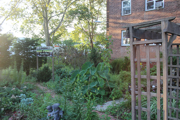 Patterson Houses resident Marta Diaz started the Rain Forest Garden about 20 years ago.
