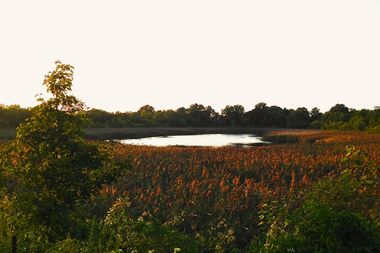 The Ridgewood Reservoir is located on the Brooklyn–Queens border and is part of Highland Park.