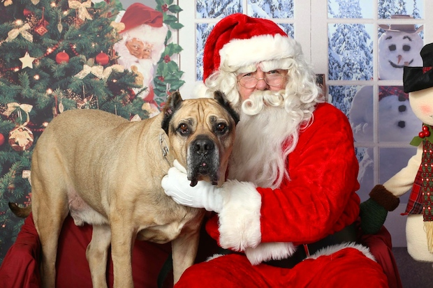 Places across the city will have days for you to get pictures with Santa and your pets.