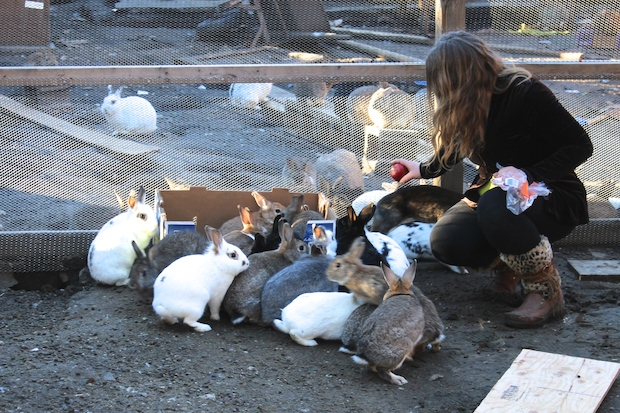 Rabbit lovers worry that a flock of bunnies in Gowanus could soon overwhelm their owner.