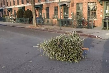 The city will start picking up Christmas trees curbside starting on Jan. 4.