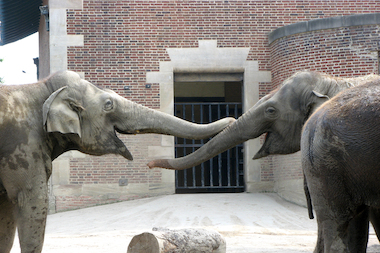 The group In Defense of Animals recently released its annual list of the 10 worst zoos for elephants in North America.