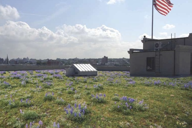 The city's Department of Enviromental Protection is funding several green roof projects.