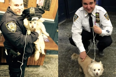 Police at the 88th Precint found a small white dog outside the station house in Clinton Hill.