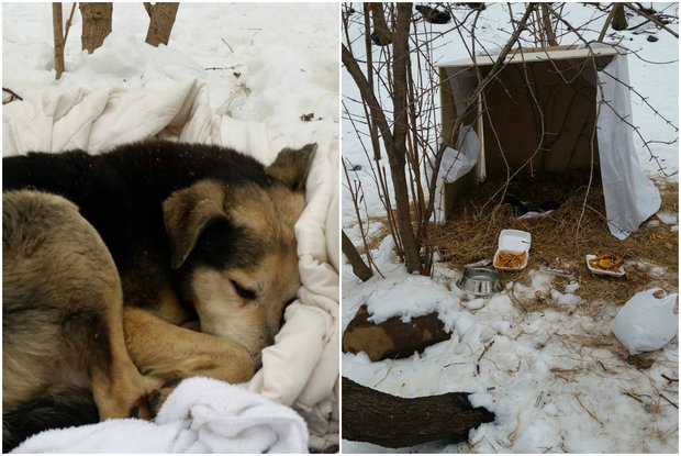 A neighbor built a shelter Highbridge Park and slept with the wild dog to coax him to safety.