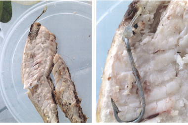 A couple sued Villagio on the Park for serving a branzino fish with a large metal fish hook inside.
