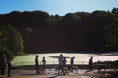 A pre-renovation shot of Prospect Park's dog beach.