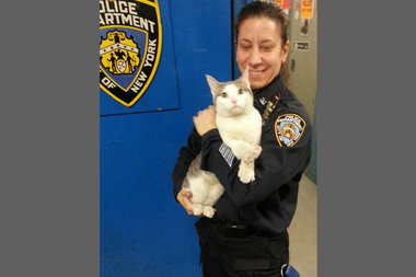 The 34th Precinct is looking for the owner of a cat that walked into the precinct on Monday.