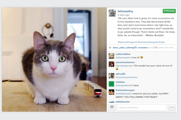 Felines of New York features NYC cats' photos alongside their quotes.