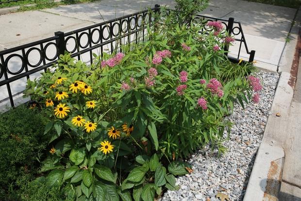 Image result for curb side garden