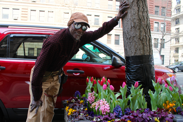The tree that someone hacked on West End Avenue was repaired by a local gardener who hopes his work will save it.