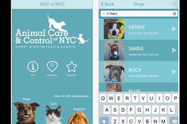 An app inspired by popular dating apps like Ok Cupid and Tinder allows you browse animals up for adoption at city shelters.