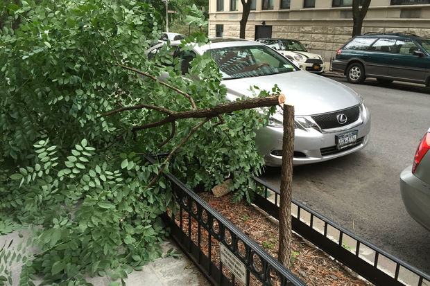 A man with an ax chopped down three trees along West 94th Street.