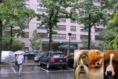 A Shih Tzu, a pomeranian and a basset hound are among the dogs banned from 170 West End Ave. The co-op board requires dog-owning residents to get a veterinarian to certify a pet's breed. If the breed is unknown, the board may require a DNA test, according to a copy of the policy.