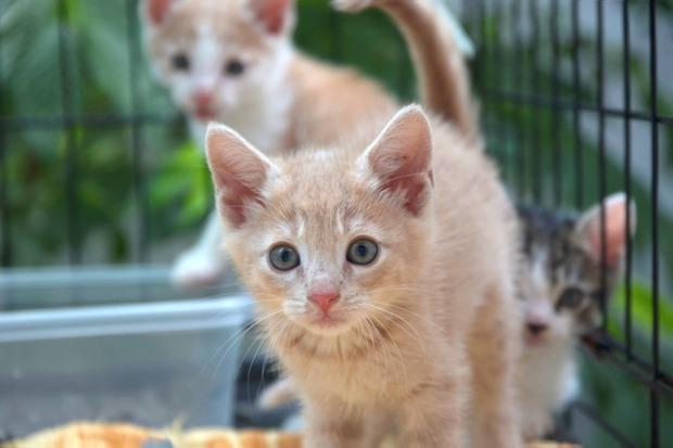 Kitten Season' Leaves Hundreds of Stray Cats on Brooklyn Streets