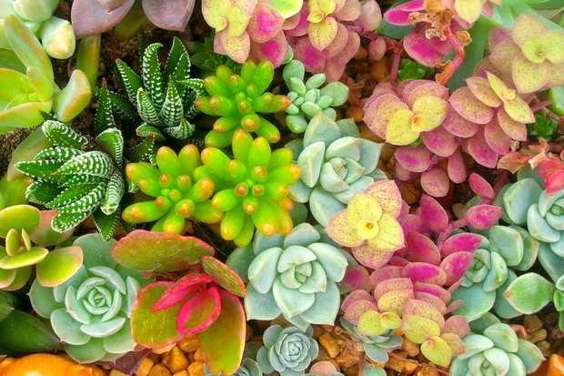How Not to Kill All Your Plants: Green Thumb Advice for Your