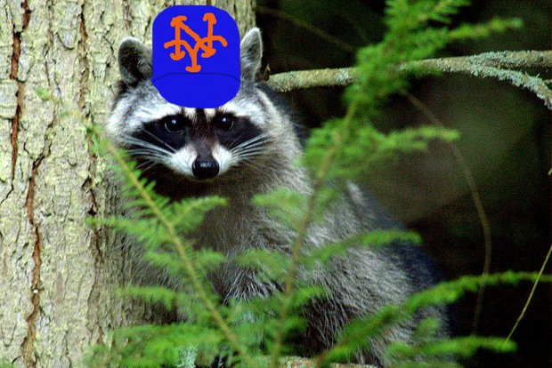 Unfortunately, the four-legged creature can't hit so the Mets set him free.